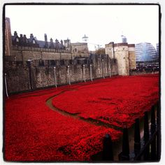 Poppies at The Tower of London - stunning!