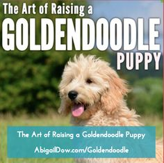 Great book! The Art of Raising a Goldendoodle Puppy: From Puppyhood to Adult, by Abigail Dow  http://AbigailDow.com/goldendoodle