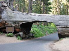 Parc National de Séquoia, Californie - http://www.photomonde.fr/parc-national-de-sequoia-californie/