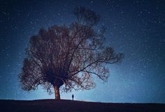 #tree #silhouette | Photography by Felicia Simion | #night #stars