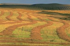 a WHEAT FIELD n Alaska (/wi:t fi:ld/)  a FIELD is an area of cultivated land. In our area you can see fields of wheat, fields of corn, fields of soy beans, and fields of sunflowers.