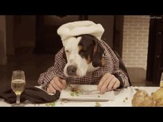 Dogs Eating at Table With Human Hands - Version 2 - Dogs Eat With Human ...