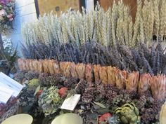rows of dried flowers