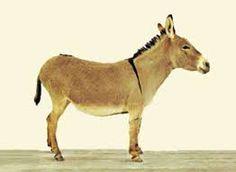 Αποτέλεσμα εικόνας για γαιδαρος Special Education, Felt, Horses, Animals, Felting, Animales, Animaux, Feltro, Animal
