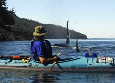 Kayaking the Alberni Inlet, Port Alberni, Pacific Rim, Vancouver Island, BC.