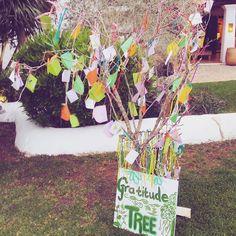 Gratitude tree in Atzaro is full!!' #atzaro #atzaroibiza #gratitude #almad #almadofficial #ibiza by almadofficial