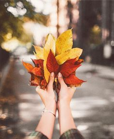 New York in the Fall - autumn colorful leaves Fotografia Macro, Autumn Cozy, Autumn Photography, Color Photography, Autumn Aesthetic Photography, Time Photography, Hello Autumn, Fall Photos, Fall Pics