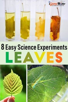 Leaf Science experiment projects for Kids. Why leaves are green? Why leaves change color? Fun STEM activities for kids to learn about trees and plant life cycle and parts of plants. For preschool to grade 6 nature class, Fall Winter science activities Science Activities For Kids, Preschool Science, Autumn Activities, Science For Kids, Stem Activities, Science Nature, Plant Science, Sequencing Activities, Children Activities