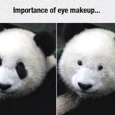 18 Random Funny Pics and Memes- Haha the panda one, love it! 9gag Funny, Funny Memes, That's Hilarious, Funny Captions, Blunt Cards, Funny Cute, The Funny, Super Funny, Anne Taintor