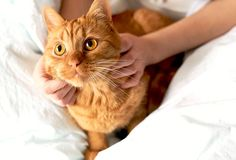Los gatos son vulnerables a una serie de trastornos de la piel, por lo que para el bienestar de su gato necesita mantener su piel sana. No olvides que la piel de tu gato es uno de los órganos más