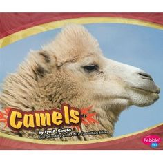 Camels - another Pebble book