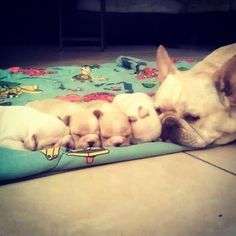 momma frenchie and wee ones... Limited Edition French Bulldog Tee http://teespring.com/lovefrenchbulldogs