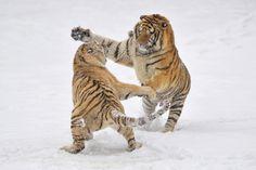 Dangerous games by Alexey Tishchenko on 500px
