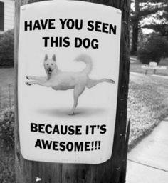 #Awesome dog #funny