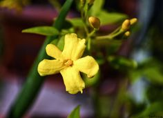 Photographe : Sadana Silhol Dandelion, Flowers, Plants, Gardens, Photography, Floral, Plant, Taraxacum Officinale, Royal Icing Flowers