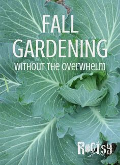 Fall and winter gardening can be tough. At planting time you're knee deep in harvesting and need a break. But a fall garden doesn't have to be overwhelming winter garden Fall Gardening - Without the Overwhelm Florida Gardening, Gardening Zones, Container Gardening, Gardening Tips, Texas Gardening, Flower Gardening, Garden Plants, Growing Winter Vegetables, Fall Planting Vegetables