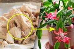 Nápady a Tipy Ikebana, Indoor Plants, Ethnic Recipes, Food, Gardening, Ursula, Bonsai, Iris, Flowers