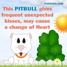 This PITBULL gives frequent unexpected kisses, may cause  a change of Heart