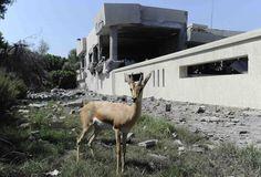 Tripoli, Libya - August 19, 2011