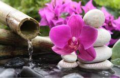 MardeBelleza: Crea tus aguas florales en apenas unos minutos, ah...