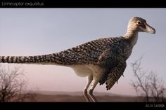 Linheraptor exquisitus by Julio Lacerda. Is believed to be a basal dromaeosaurid, lived in China in the late Cretaceous. His most famous relative, of course, is the velociraptor.