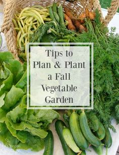 Fall Vegetable Gardening Tips to plan and plant a fall vegetable garden - Use these tips for a successful fall vegetable garden - a second crop of spring vegetables to harvest in the fall by sowing seeds June through August. Growing Winter Vegetables, Fall Vegetables, Organic Vegetables, Veggies, Indoor Vegetable Gardening, Backyard Vegetable Gardens, Organic Gardening, Herbs Garden, Backyard Farming