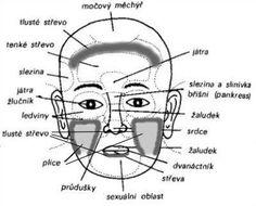 Diagnostika plic a tlustého střeva