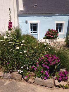 Roses trémières - île d'Houat,(Morbihan),Bretagne.