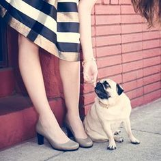 neither does this one get od either! Pumps & pugs