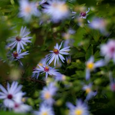 https://flic.kr/p/zJTt7M   Summer Wildflowers 011   kaleidoscoping