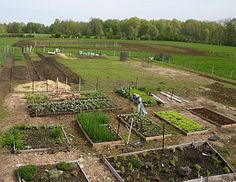1000 images about layered gardening on pinterest lasagna gardening and gardens - Lasagna gardening in containers ...