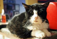 This Cat Lived In a Rough Situation For 20 Years, Until A Family Took Him In And Changed His Life http://viralabout.com/this-cat-lived-in-a-rough-situation-for-20-years-until-a-family-took-him-in-and-changed-his-life/ This 20-year-old cat who lived a nightmare life. Recently he was sent to Best Friends Animal Society where he spent the time with other cats looking for forever homes.  Dexter was very old, toothless and had patchy, so they were not sure if somebody will want to