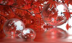 Image result for fall wallpaper Gifs, Fall Wallpaper, Happy Thanksgiving, Cool Pictures, Christmas Bulbs, Bubbles, Free, Autumn, Seasons