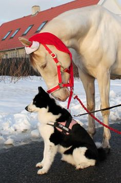Christmas Horse and dog