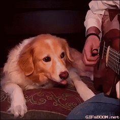 animals dog vine to