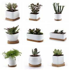 impressive design modern succulent planter. nice ceramic planters with bamboo tray set parent awesome T4U 3 Inch Mini Hexagonal Modern White Ceramic Succulent