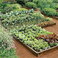 Learn exactly how to plan your first vegetable garden with this step by step guide! Discover what tools you need, how to plan your vegetable garden layout, determining the perfect spot for your garden and which vegetables grow best depending on the season and region. #Toolsforyourvegetablegarden #gardeningplanslayout #vegetablegardeninglayout