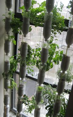 """""""Window gardening"""" is catching on in cities.  What's needed are a sunny window, some basic supplies, and a little bit of time to construct"""