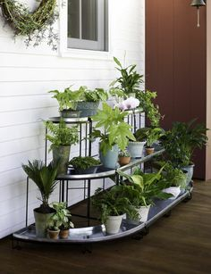 Multi-tiered plant terraces like this one have been popular in Europe for generations. Our most popular plant terrace configuration is this set of one Straight Plant Terrace and two Quarter-Round Terraces. If you have a large collection of plants to show off, this is a most attractive and versatile plant stand set to display them on.