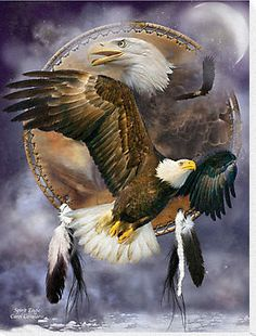 Dromenvanger - Spirit eagle sacred messenger flying strong and solitary surviving and soaring taking us beyond our fears carrying our dreams to the Universe. A bald eagle in flight, with an eagle head behind, within a dream catcher Native American Wolf, Native American Pictures, Native American Artwork, American Indian Art, American Indians, American Flag, Eagle Images, Eagle Pictures, Animal Spirit Guides