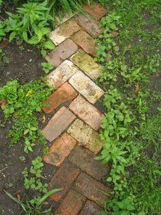 kaycibabe:    Reclaimed bricks used as a garden path.