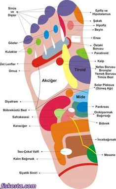What is foot reflexology? We explain all facts! Health Facts, Health Diet, Health And Wellness, Health And Beauty, Health Fitness, Save Your Life, Foot Reflexology, Alternative Treatments, Massage Therapy