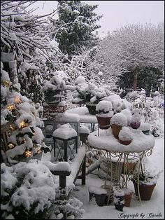 A winter garden - Click image to find more Gardening Pinterest pins