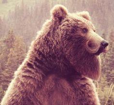 #bearswithbeards #oursbarbu