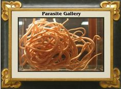 Parasites in Your Colon