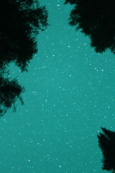landscapes, scenery, skies, nighttime, stars, trees, teal