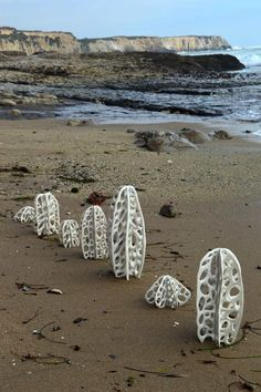 jenni ward ceramic sculpture | in the field | bone series
