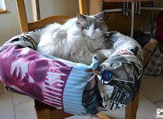 Des explications pour vous aider à réaliser un coussin pour votre chat... Ou chien ^^