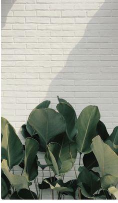 Le plus à jour Photos plantes background Suggestions Framed Wallpaper, Plant Wallpaper, Flower Background Wallpaper, Green Wallpaper, Flower Backgrounds, Phone Backgrounds, Wallpaper Backgrounds, Plant Background, Greenery Background