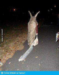 That was my friend's last Halloween costume